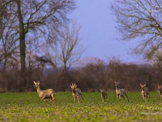 Wald vor Wild: Jagdgesetz nicht verfassungskonform