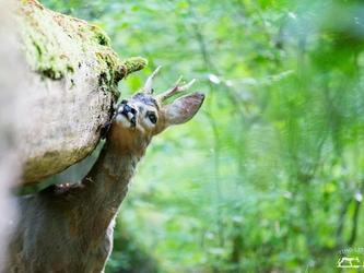 Der Gedanke des Staatsziels Tierschutz wird nicht gelebt