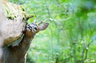 Wald vor Wild – eine Kritik zum Umgang mit den Rehen
