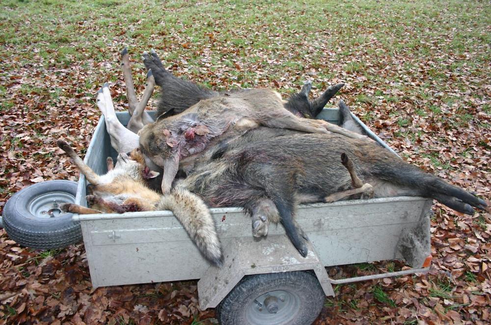 Ist das waidgerechte Jagd?