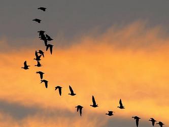 Jagdverbot Kanton Genf: Mehr Artenvielfalt auf dem See
