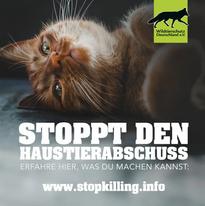 Haustierabschuss-Katze-r-_FILEminimizer_
