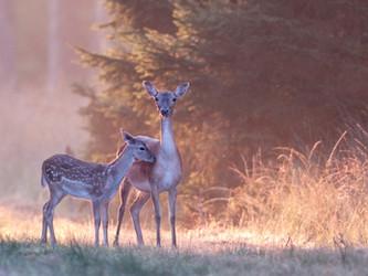 Nicht mehr waidgerecht: Jagdzeit in Hessen jetzt schon im April