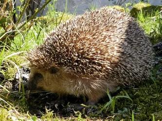 Artenschutz á la Jagdverband