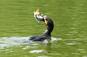 Wildtiere in Bayern: Von der Hochschule bis ins Ministerium - keine Achtung vor der Kreatur