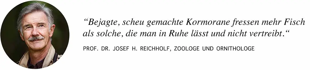 Prof. Reichholf zur Jagd auf Kormorane