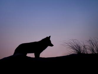 Der Wolf und die jagdgrünen Götter