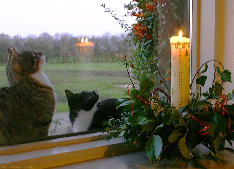 Dänische Kalenderkerze mit Katzen