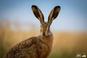 Wildtierpflege: Junghasen nicht der Natur entnehmen