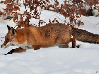 Steuergelder für gewerbliches Pelzprojekt der Jagdverbände