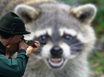 Kill the beast! Der Vogelsbergkreis hat den Waschbären den totalen Krieg erklärt