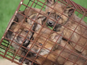 Fuchsfallen: Dokumentierte Tierquälerei