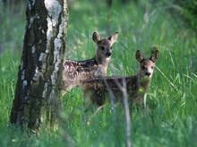 Bambi kann sich nicht sicher sein, dass seine Mutter den Herbst noch überlebt
