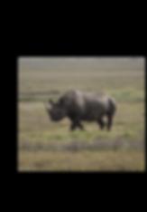 Rhino at Ngorongoro Crater