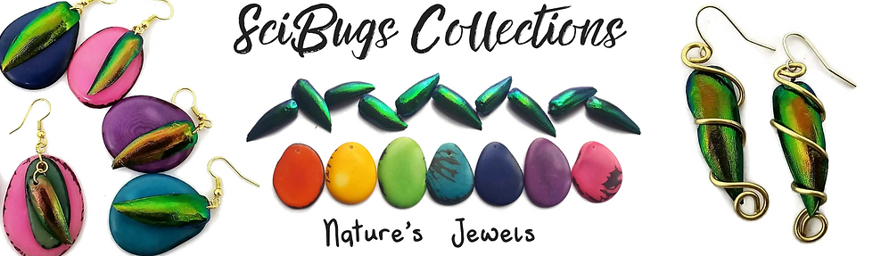 SciBugs Collections.png