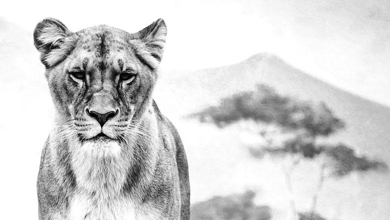 Lionesses_edited_edited_edited.jpg