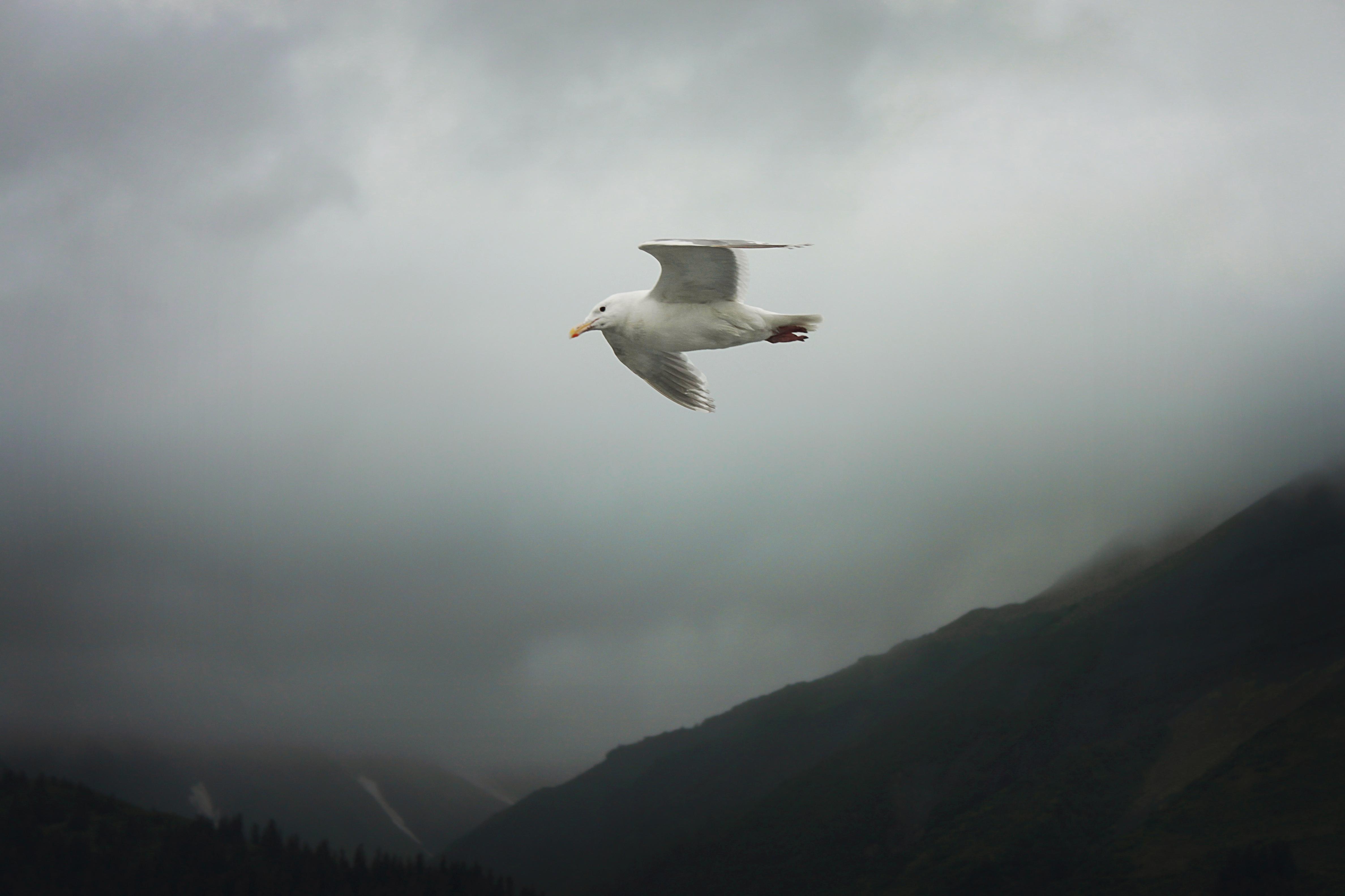 flyingbird.jpg