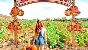 Best Pumpkin Patches in OC