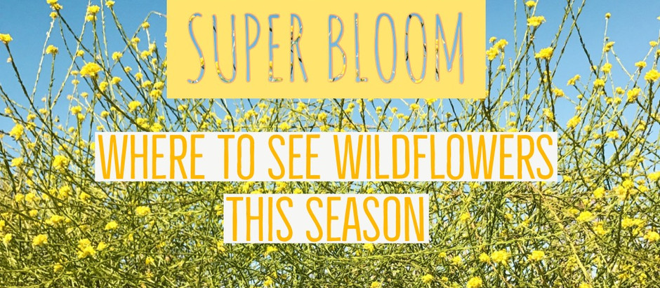Wildflowers: 5 Places To See The Super Bloom This Season