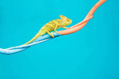 Abstract animal background, Agamidae ani