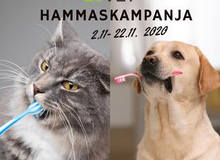 Hammaskampanja    2.11 -22.11.2020