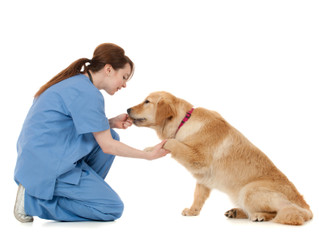 Do you want to become a veterinary nurse?