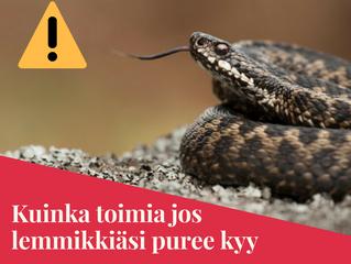 Kesä ja käärmeenpuremat