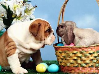 Hyvää Pääsiäistä!    Glad Påsk!