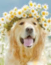 dog-flower-crown-2.jpg