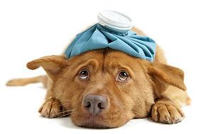 dog-headache.jpg