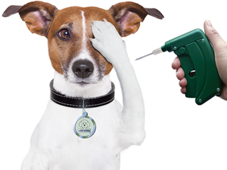 Koiranpennun mikrosirutuksen yhteydessä tarjoamme Virbac Baby Dog