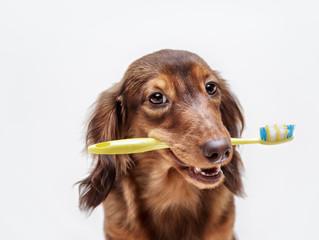 Maaliskuu on hampaidenhoitokuukausi!