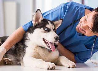 Eläintenhoitaja / Avustaja (kesätyö: 6-7.2019)