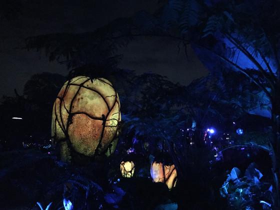 Pandora Glowing at Night