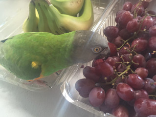 A Day In The Life of Feather Kids at Second Chance Bird Rescue