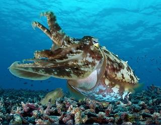 itinerary-cuttlefish-1