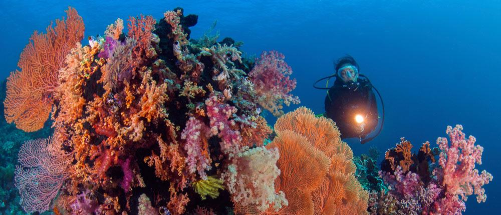 diving-experience-wakatobi_RS