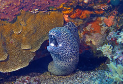 spotted eel terry