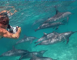 itinerary-dolphins-2