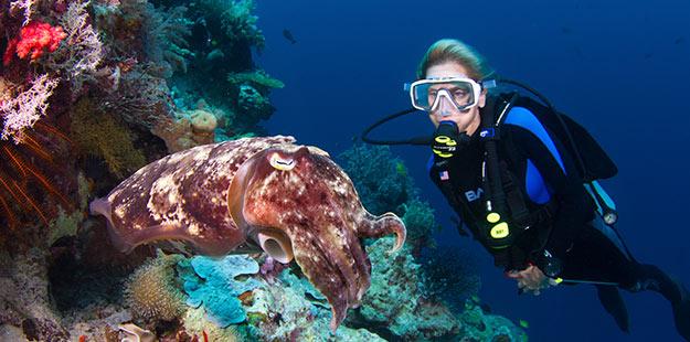 Diver-with-cuttlefish-Wakatobi-wall