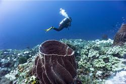 Aurora-Scuba-Diver-and-Reef