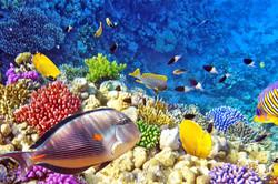 Raja-Ampat-Underwater