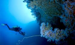 Dive-White-Wall-2-800x480