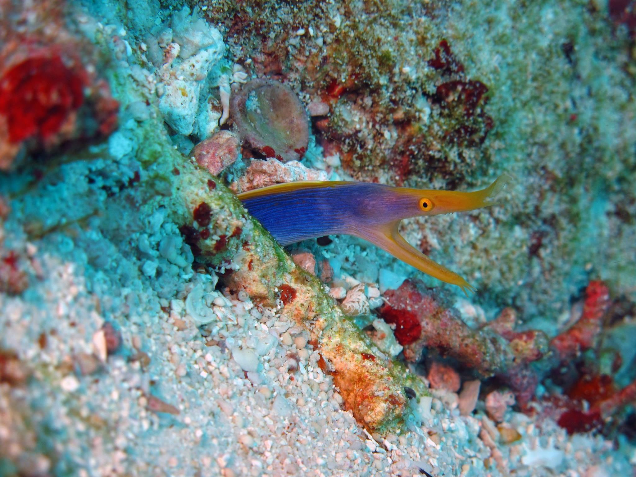 Blue Ribbon Eel Lynn