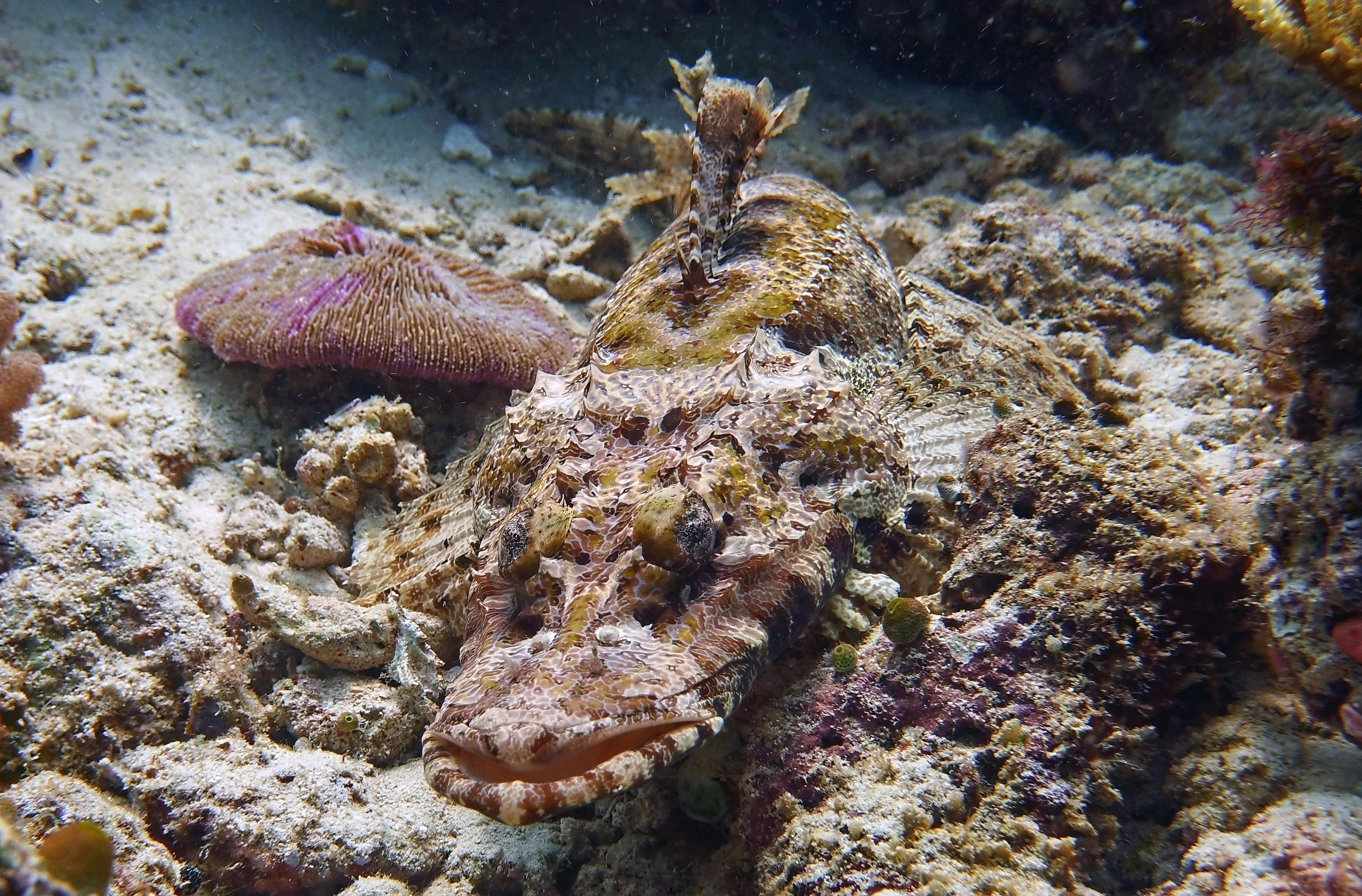 crocfish