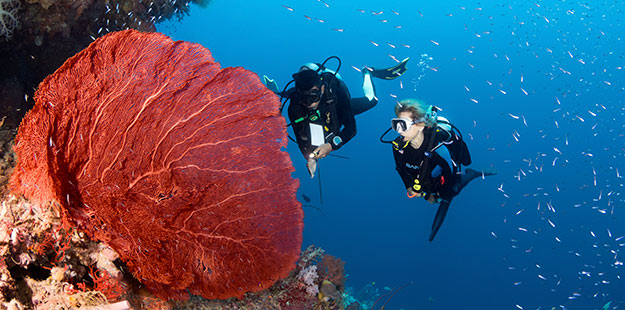 Private-dive-guide-experience-Wakatobi-0
