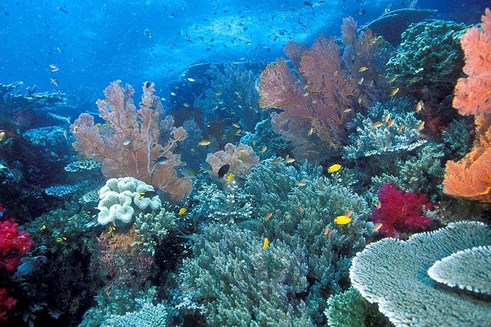 Raja-Ampat-Reef
