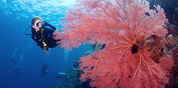 dive-experience-Pelagian-divers-on-wall.