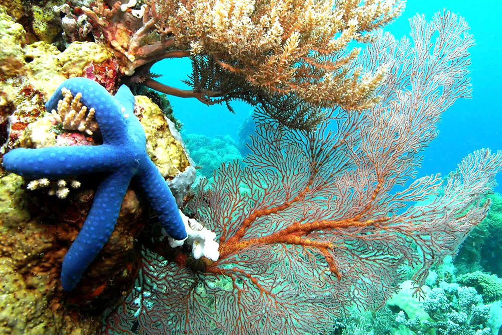 Raja-Ampat-Starfish