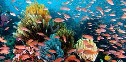 Reef-scenic-wakatobi-ws